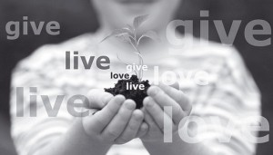 give live love